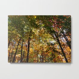 Through the Trees in October Metal Print