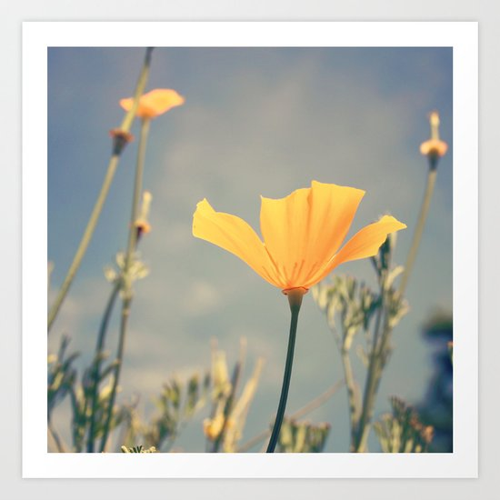 orange poppies! Art Print