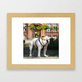 No Entry - Bulldog #decor #homedecor Framed Art Print