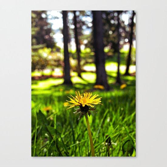Park dandelion Canvas Print