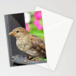 Sparrow Morning Stationery Cards