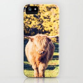 Lovely Scotland Highland Cow (Scottish Highland Cattle) is walking in the sun iPhone Case