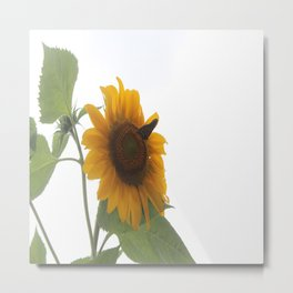 Butterflies on The Sun A Metal Print