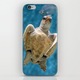 Loggerhead Sea Turtle iPhone Skin