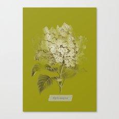 Hydrangea on Moss Cloud Canvas Print