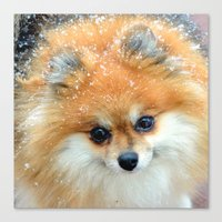 pomeranian Canvas Prints featuring Pomeranian  by Julie Rawlings