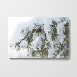 Winter's Pine 10 Metal Print