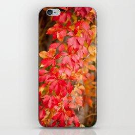 Vitaceae family red plant Parthenocissus quinquefolia vine iPhone Skin
