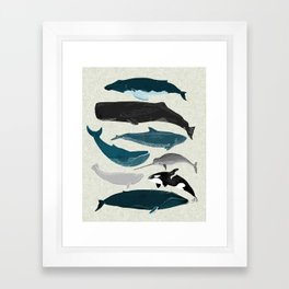 Whales and Porpoises sea life ocean animal nature animals marine biologist Andrea Lauren Framed Art Print
