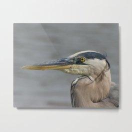 Great Blue Heron Animal / Coastal Wildlife Photograph Metal Print