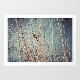 Sedge Warbler At Titchwell Art Print