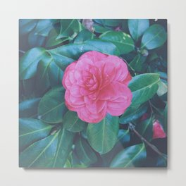 Camellia the Lonesome Metal Print