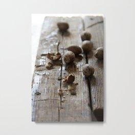 pecan Metal Print