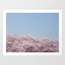 cherry blossum Art Print