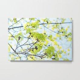 Fresh Green Spring Buds Metal Print
