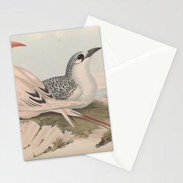 Red-tailed Tropic Bird, phaeton phoenicurus3 Stationery Cards