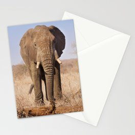 Elephant in Kruger National Park, South Africa Stationery Cards