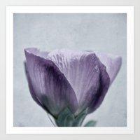 hibiscus Art Prints featuring hibiscus by Iris Lehnhardt
