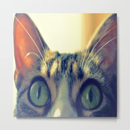 green catty eyes Metal Print