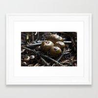 mushrooms Framed Art Prints featuring Mushrooms by Kent Moody