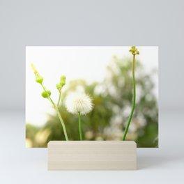 Nature photography dandelion I Mini Art Print