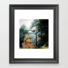 Transition....the Seagull and the Kite Framed Art Print