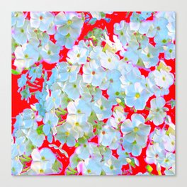 BLUE TINGED WHITE PHLOX FLOWERS RED Canvas Print
