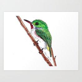 Jamaican Tody Bird Art Print