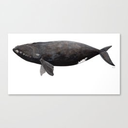 Northern right whale (Eubalaena glacialis) Canvas Print