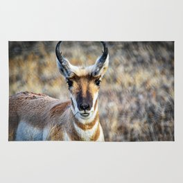 The Face Of A Pronghorn Buck Rug