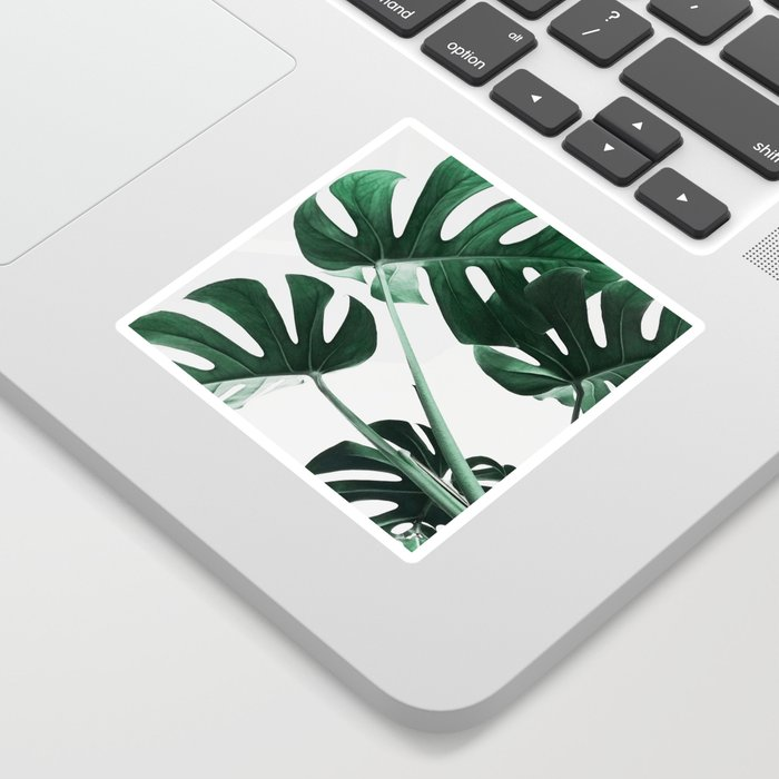 Monstera, Leaves, Plant, Green, Scandinavian, Minimal, Modern, Wall art Sticker