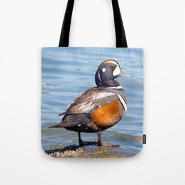 Beautiful Harlequin Duck on the Rocks Tote Bag