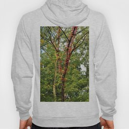 Deep Wounds of the Past Hoody