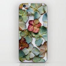 Hydrangea Petals no. 1 iPhone & iPod Skin