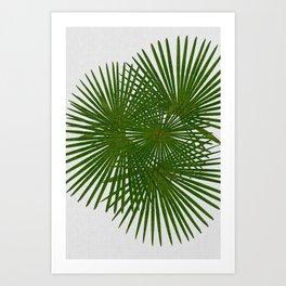 Fan Palm, Tropical Decor Art Print