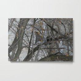 Squirrel !  Metal Print