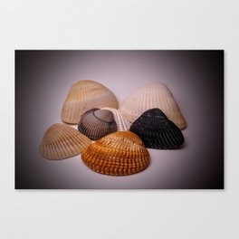 Different color shell Canvas Print