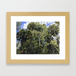 Highlands Hammock Framed Art Print