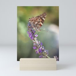 Painted Lady Buttefly On Lavender Mini Art Print