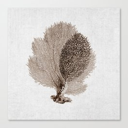 Brown Sea Fan Coral Illustration Nautical Decor Canvas Print