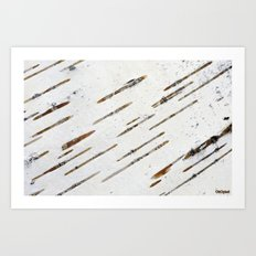 Birch-bark Art Print