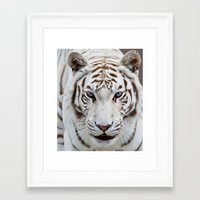 tiger Framed Art Prints featuring TIGER TIGER by Catspaws