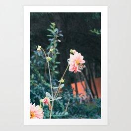 Dahlia and Monarch Art Print