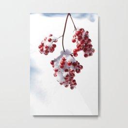 Delicate Snow Metal Print