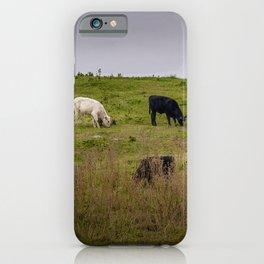 Irish Cattle grazing  iPhone Case