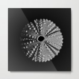 Sea Urchins... Metal Print