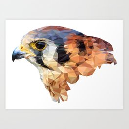 Falcon head Art Print