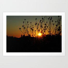 sunset & flowers Art Print