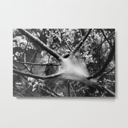 Apple Silk Metal Print