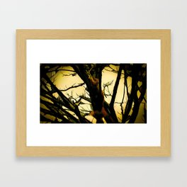 Squirrel in the tree Framed Art Print